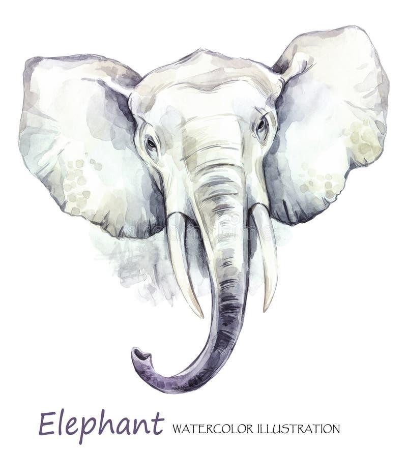 Слон акварели на белой предпосылке африканское животное Иллюстрация искусства живой природы Смогите быть напечатано на футболках, иллюстрация вектора