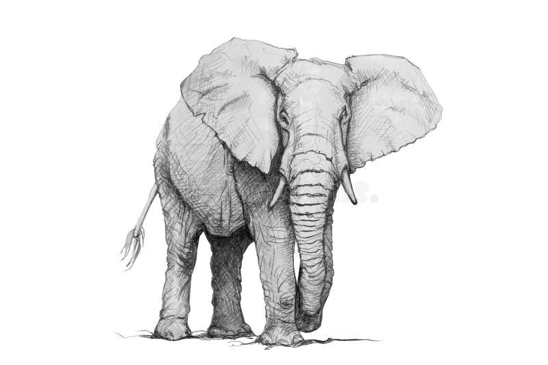 Слон вектора иллюстрация карандаша стоковые изображения rf