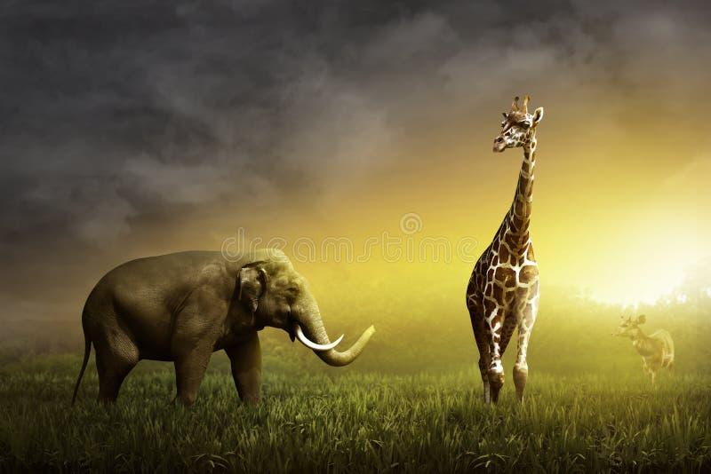 Приглашение детское, картинки со слоником и жирафом
