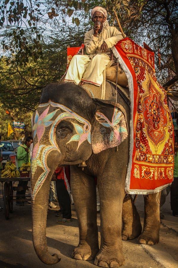 Слон и Mahaout на улице Индии стоковая фотография rf