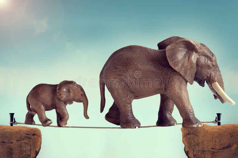 Слон матери и младенца на опасном положении стоковое фото rf