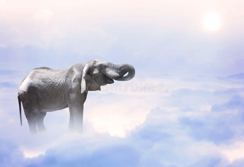 Слон стоя на облаках стоковая фотография rf