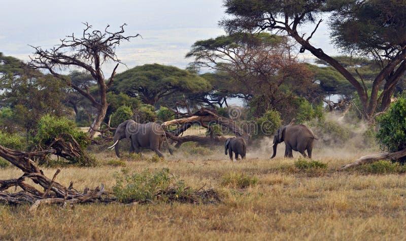 Download Слон стоковое изображение. изображение насчитывающей больш - 40582995