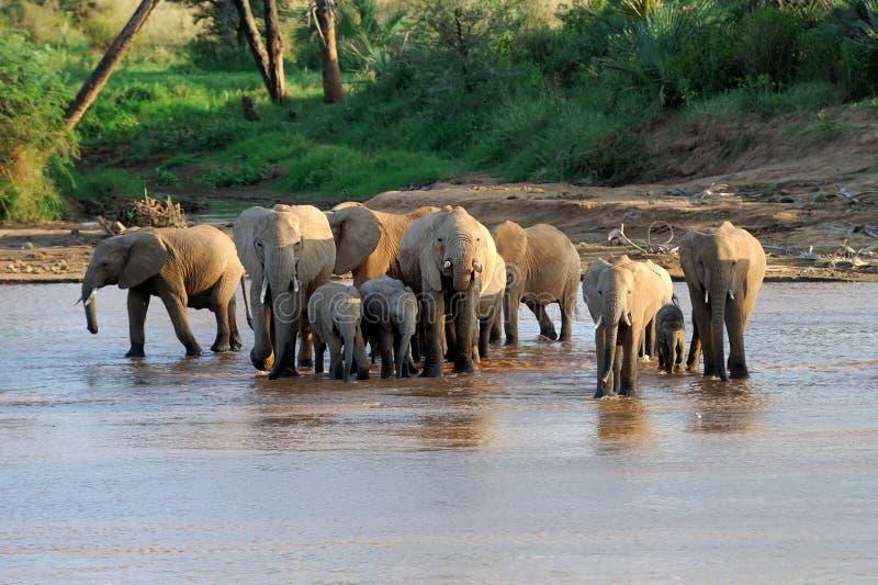 Download Слон стоковое фото. изображение насчитывающей daytime - 40583960
