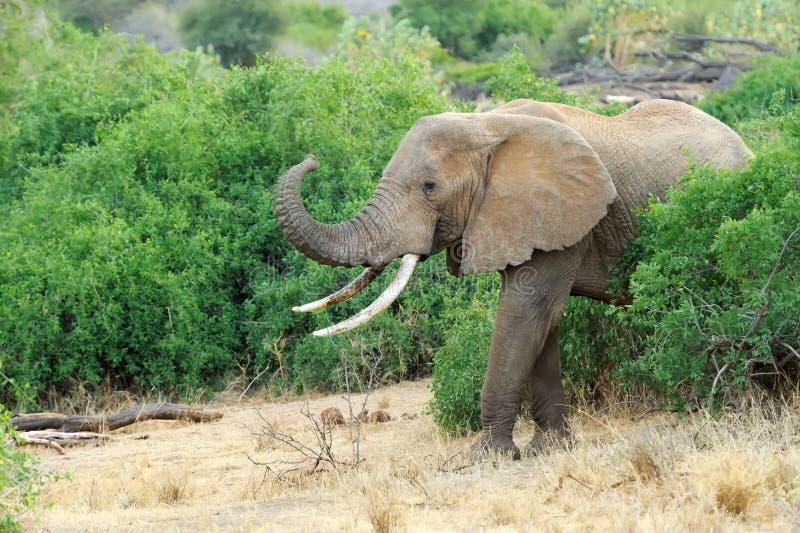 Download Слон стоковое фото. изображение насчитывающей daytime - 40584190
