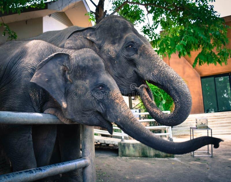 Слон Chang тайский стоковая фотография rf