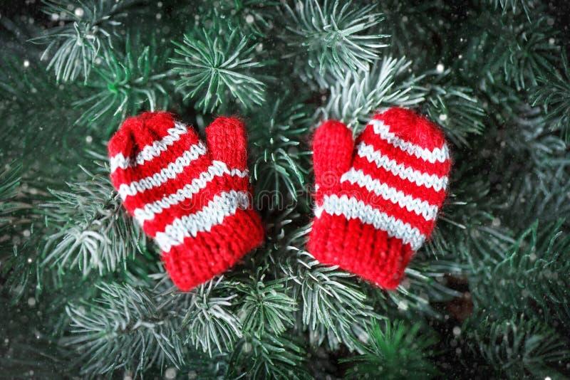 С Рождеством Христовым и с новым годом Небольшие связанные mittens на рождественской елке стоковая фотография