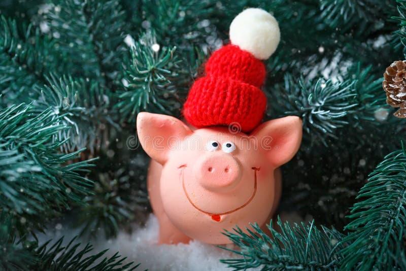 С Рождеством Христовым и с новым годом Свинья игрушки в ветвях спруса Предпосылка с космосом экземпляра Селективный фокус стоковые фотографии rf