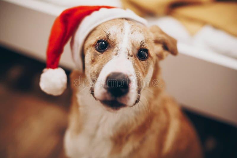 С Рождеством Христовым и счастливая концепция Нового Года милая собака в santa ha стоковое фото rf