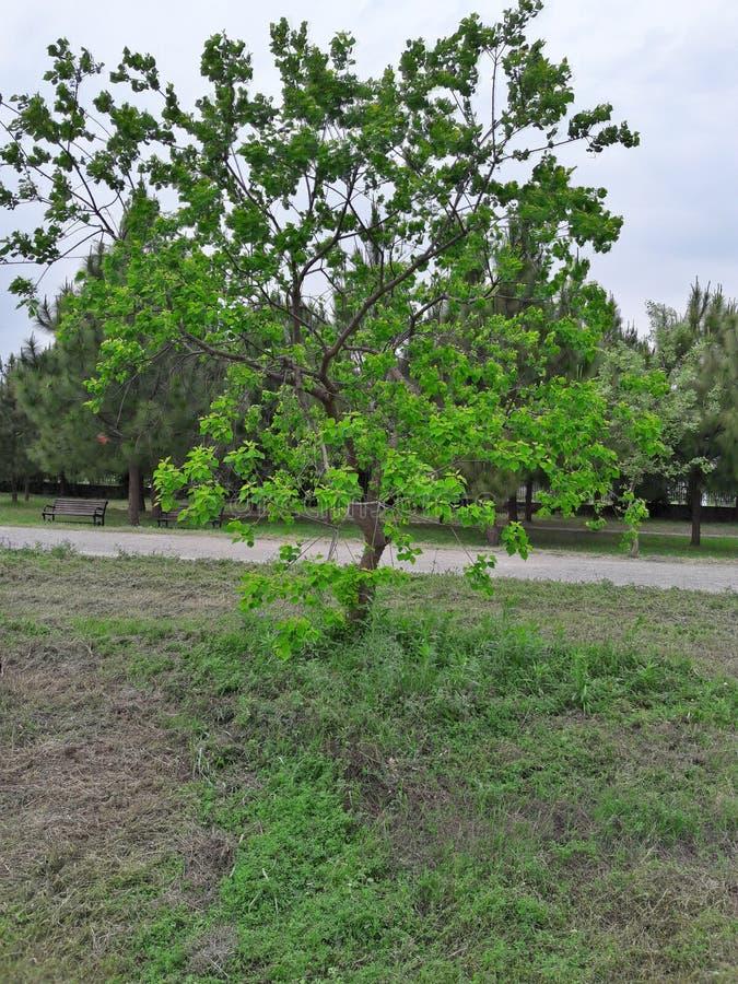 Случайное дерево стоковые изображения rf