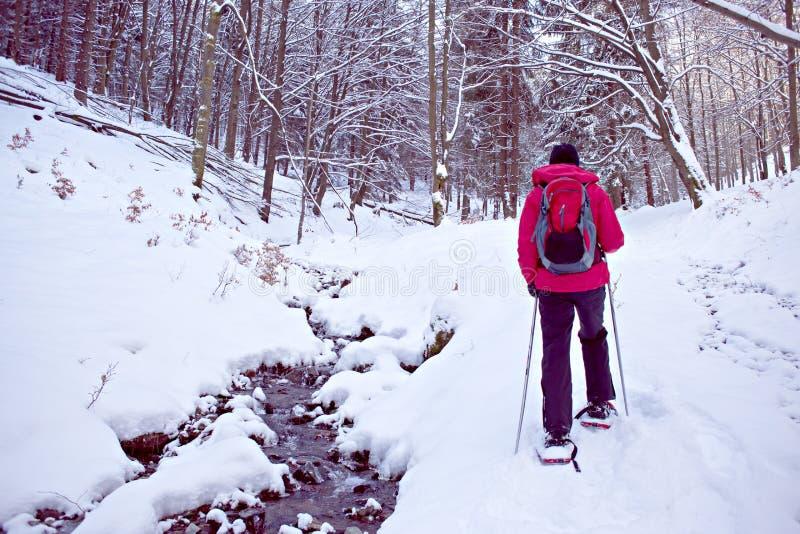 С snowshoes в лесе зимы стоковая фотография rf