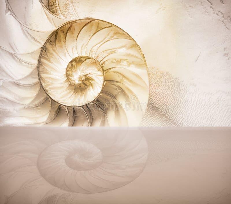 ?ut lejos de una cáscara del nautilus compartimentado, cáscara nacarada, cefalópodo popular imagen de archivo