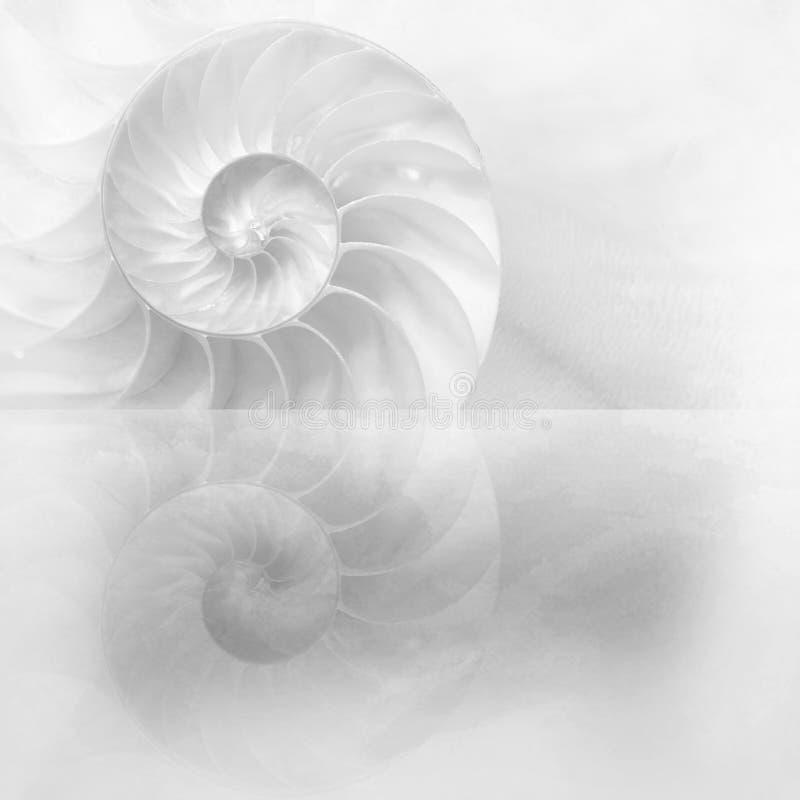 ?ut loin d'une coquille de nautilus chambré, coquille nacrée, céphalopode populaire illustration stock