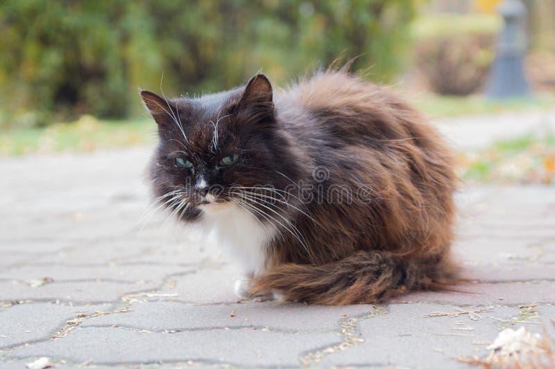 Сute bezpański kot kłama na chodniczku obraz royalty free