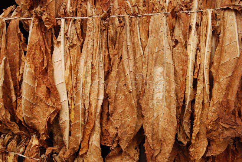 табак 10 стоковые изображения