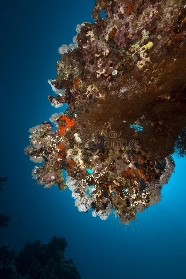 таблица Красного Моря коралла стоковое изображение rf