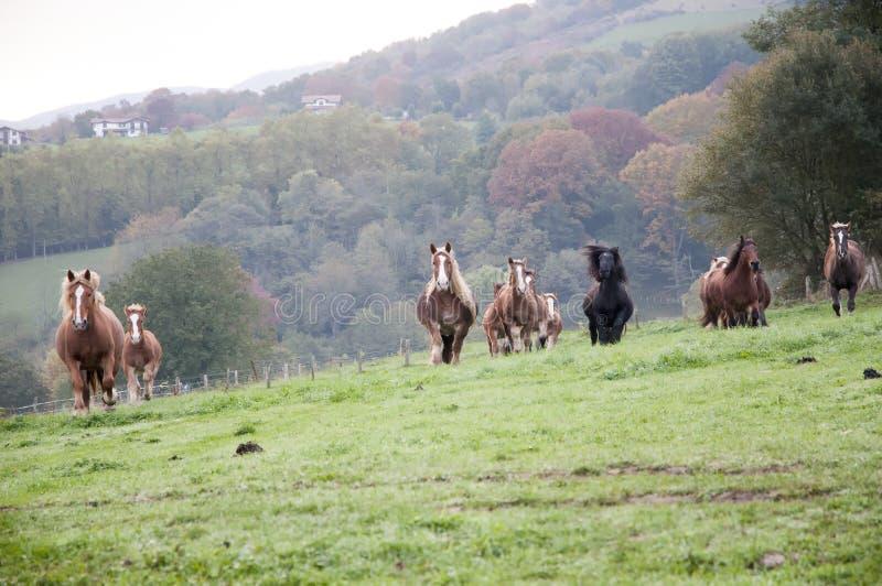Табун лошадей в луге стоковое фото