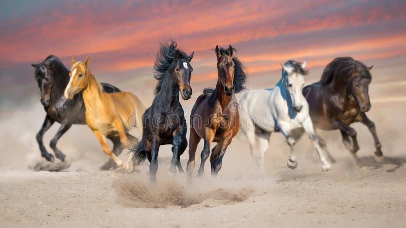 Табун лошади, который побежали в песке стоковое изображение