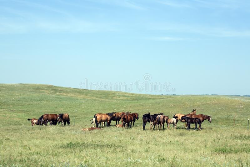 Табун лошади пася стоковая фотография rf