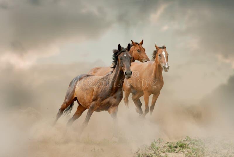Табун лошадей в пыли стоковая фотография rf