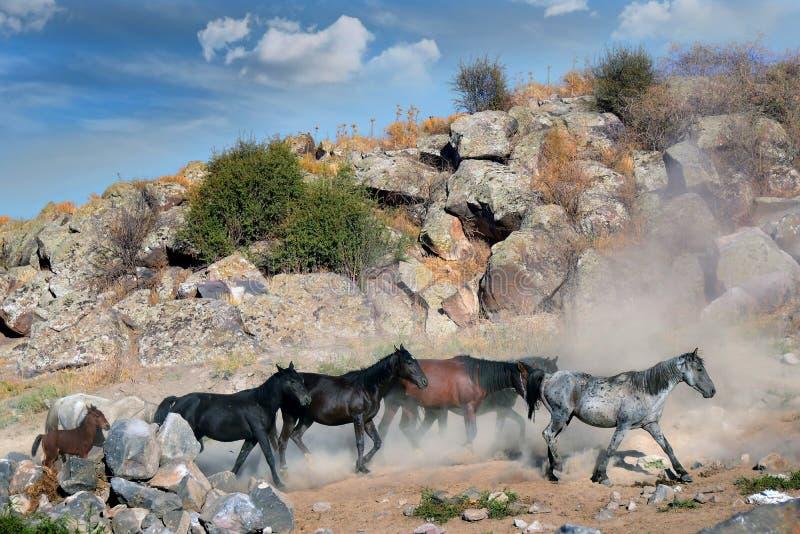 Табун лошади бежит стоковая фотография rf