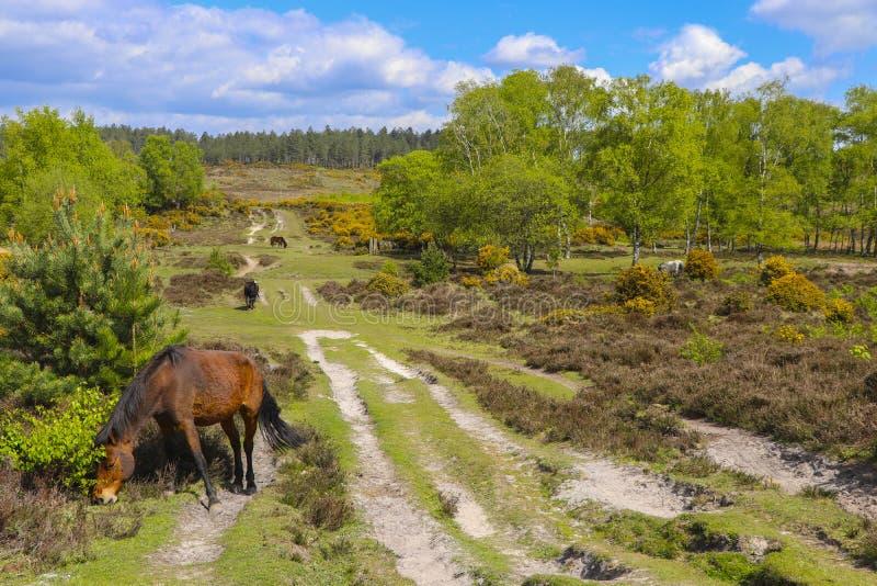 Табун лошади пася в поле стоковая фотография rf