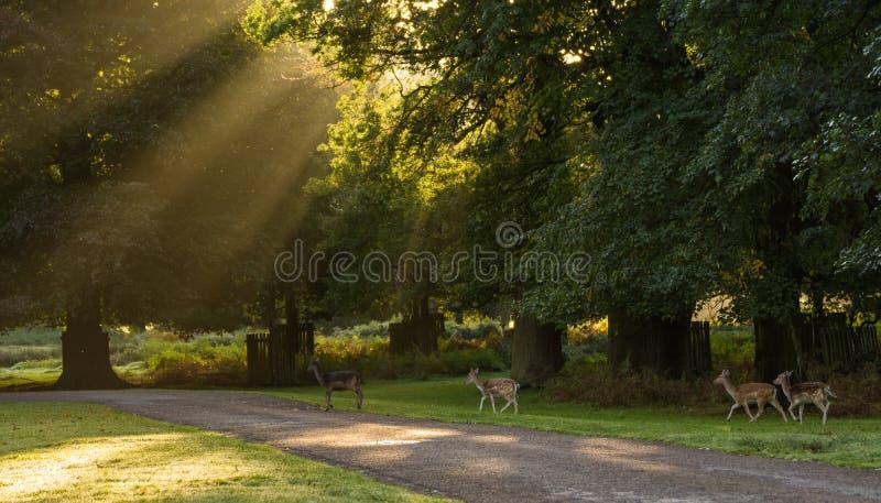 Табун оленей в парке стоковое фото