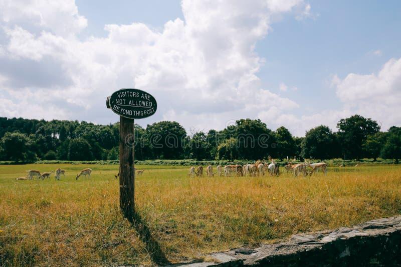 Табун оленей в парке Bradgate стоковое фото