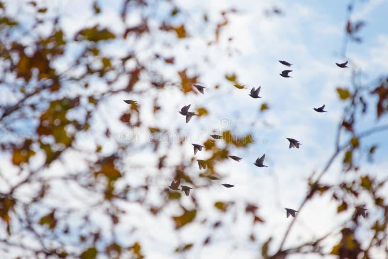 Табун птиц стоковые изображения rf