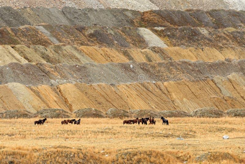 Табун Свободно-кочевать одичалые дикие лошади в долине гористой местности, Briti стоковые фото