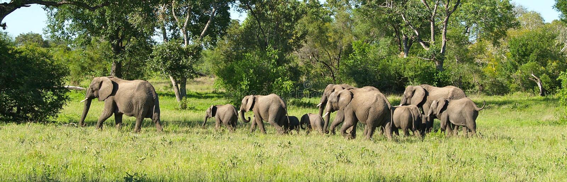 Табун слона на движении стоковые фото