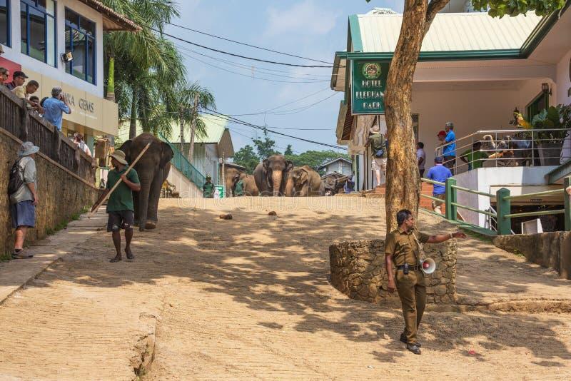 Табун слона причаливая через улицы Pinnawala стоковые фото