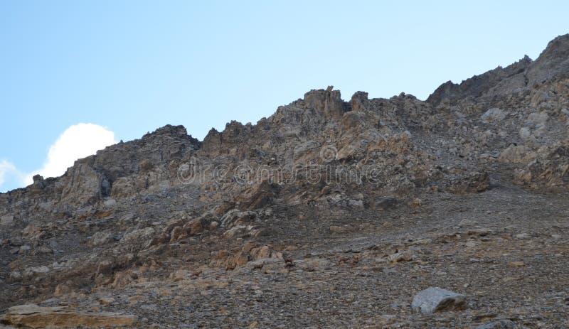 Табун Pyrenean pirenaica в массиве Posets, испанского языка Пиренеи Rupicapra шамуа стоковые фотографии rf