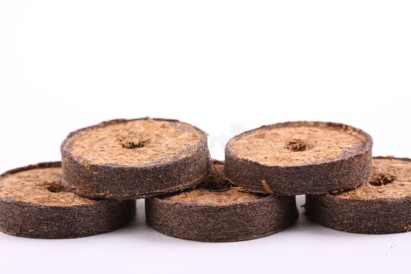 Таблетки кокоса для расти стоковое фото