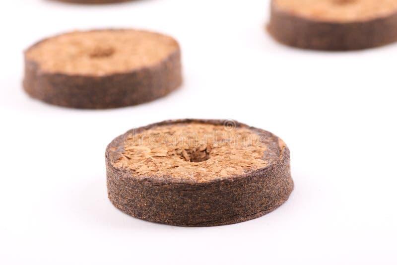 Таблетки кокоса для расти стоковые изображения