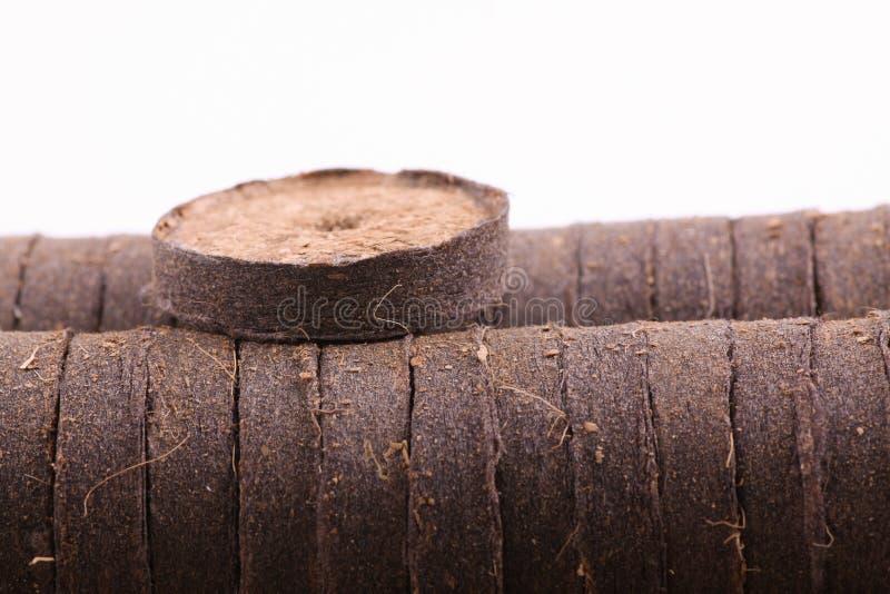 Таблетки кокоса для расти стоковое изображение rf