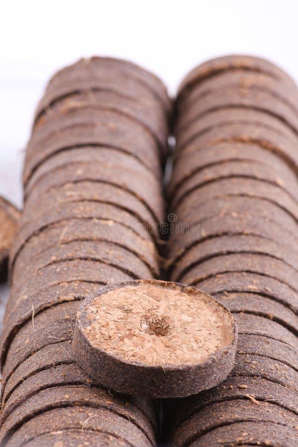 Таблетки кокоса для расти стоковая фотография