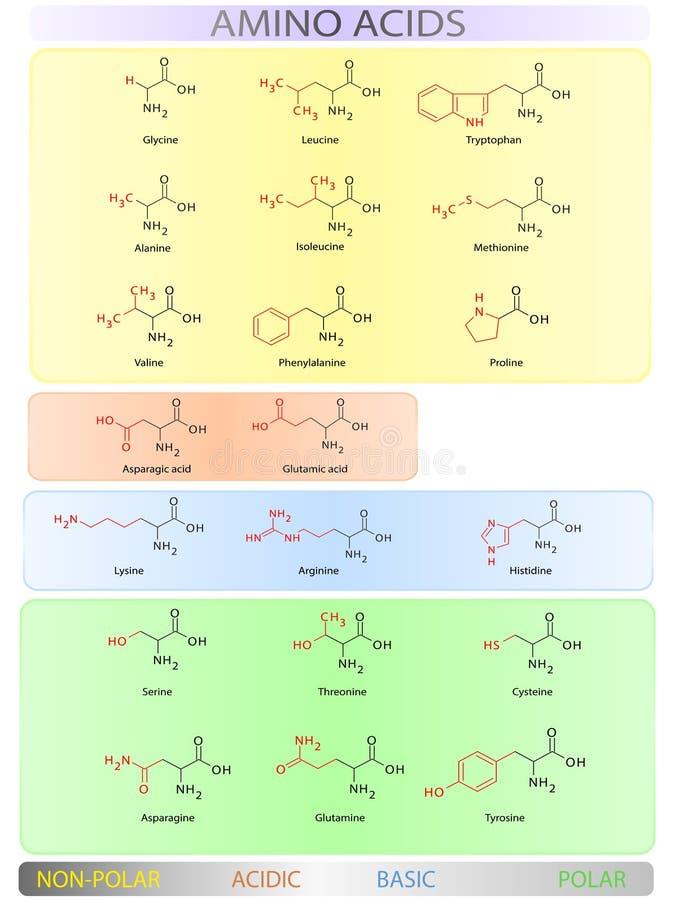Таблица аминокислот бесплатная иллюстрация