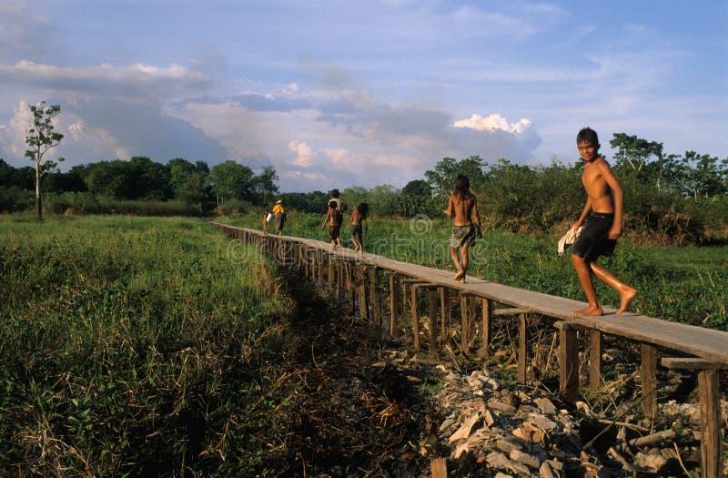 тазик Амазонкы стоковая фотография
