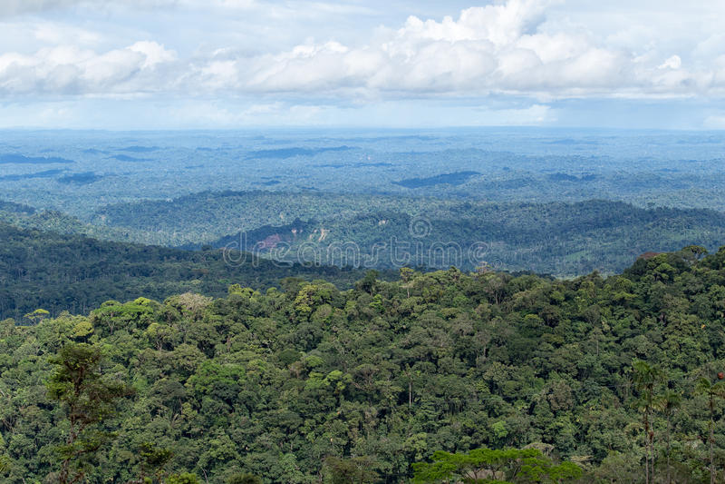 Таз Амазонки эквадора стоковое фото