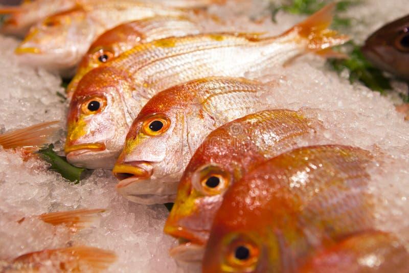 Тайвань Тайбэй, sightseeing рыбный базар, на акватических продуктах, туристические достопримечательности, магазины морепродуктов, стоковые изображения rf