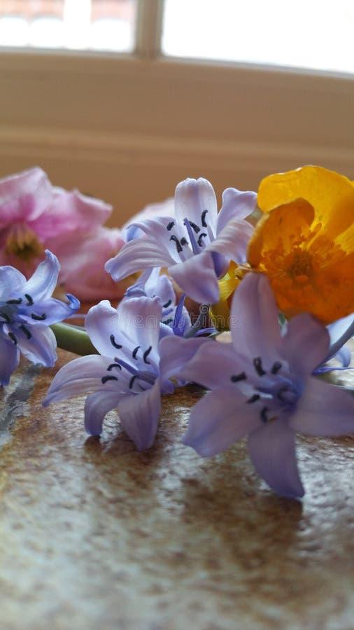 Тайна и соблазнение влюбленности белых цветков стоковые изображения rf