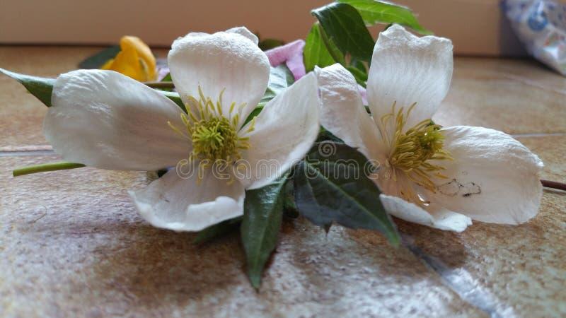 Тайна и соблазнение влюбленности белых цветков стоковое изображение