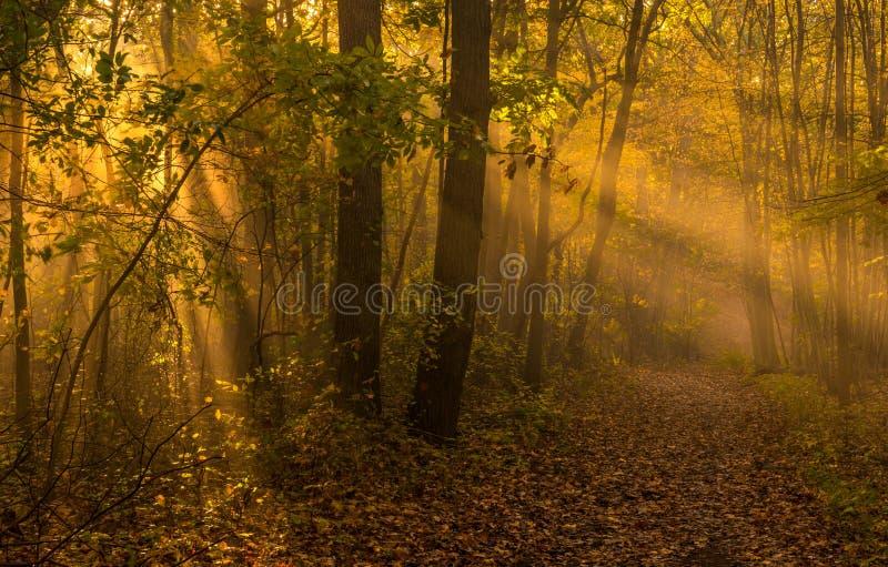 Тайна солнечного света осени стоковые изображения
