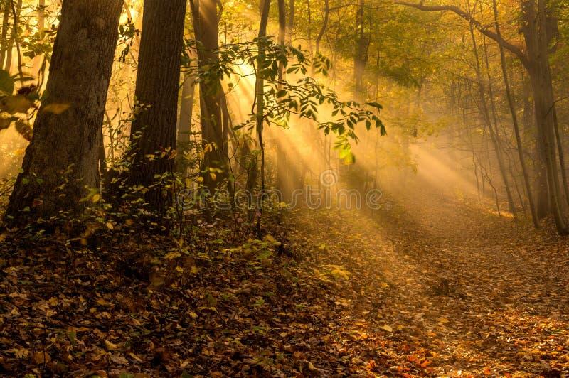 Тайна солнечного света осени стоковое изображение