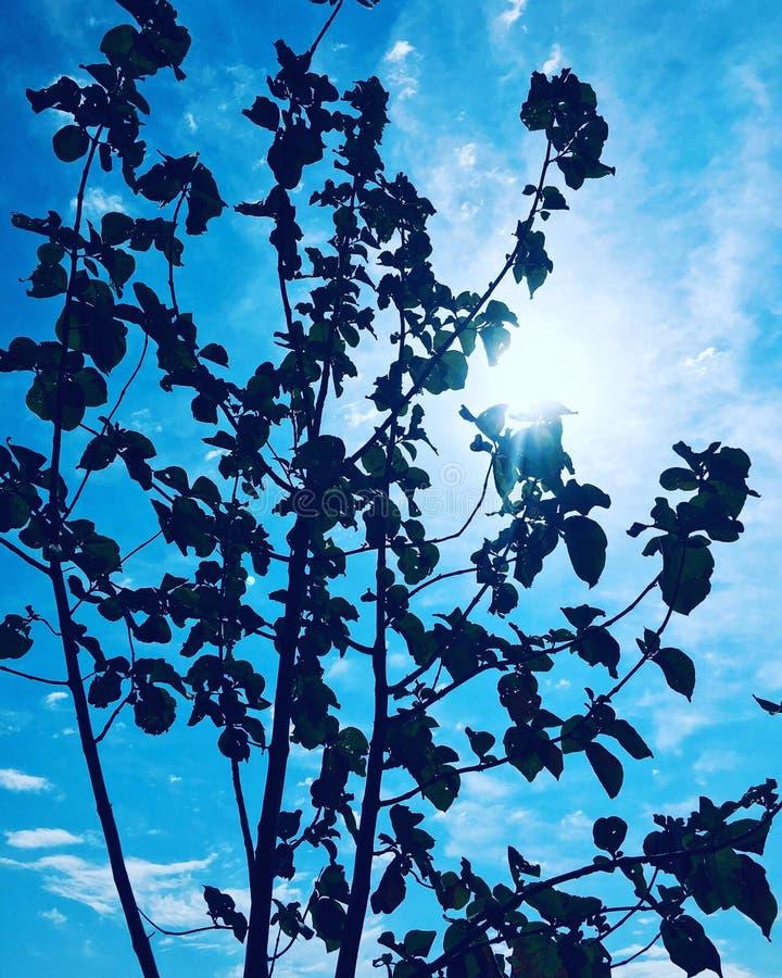 Тайник Солнца за деревом стоковые фотографии rf