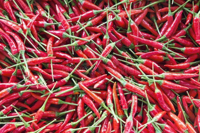 Тайская предпосылка перцев Chili стоковое фото rf