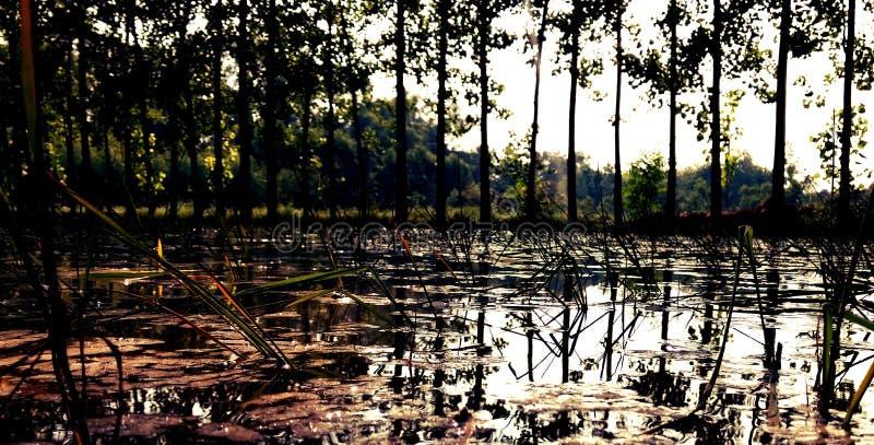 Тайская ферма стоковое фото rf
