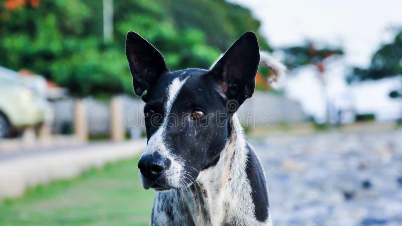 Тайская черно-белая собака на улице стоковое изображение