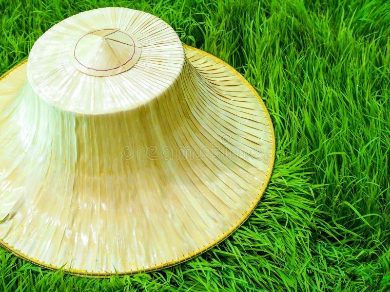 Тайская шляпа фермера стоковое фото rf